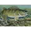 На что и как ловить судака летом: тонкости рыбалки в теплые месяцы года